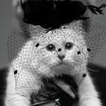котката на Лагерфелд